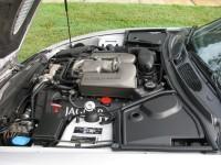 Jaguar 035